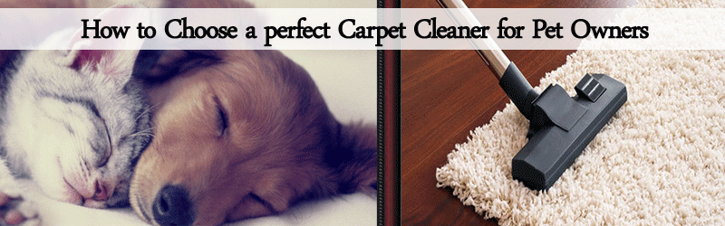 How to choose a perfect Carpet cleaner for Pet owners Image