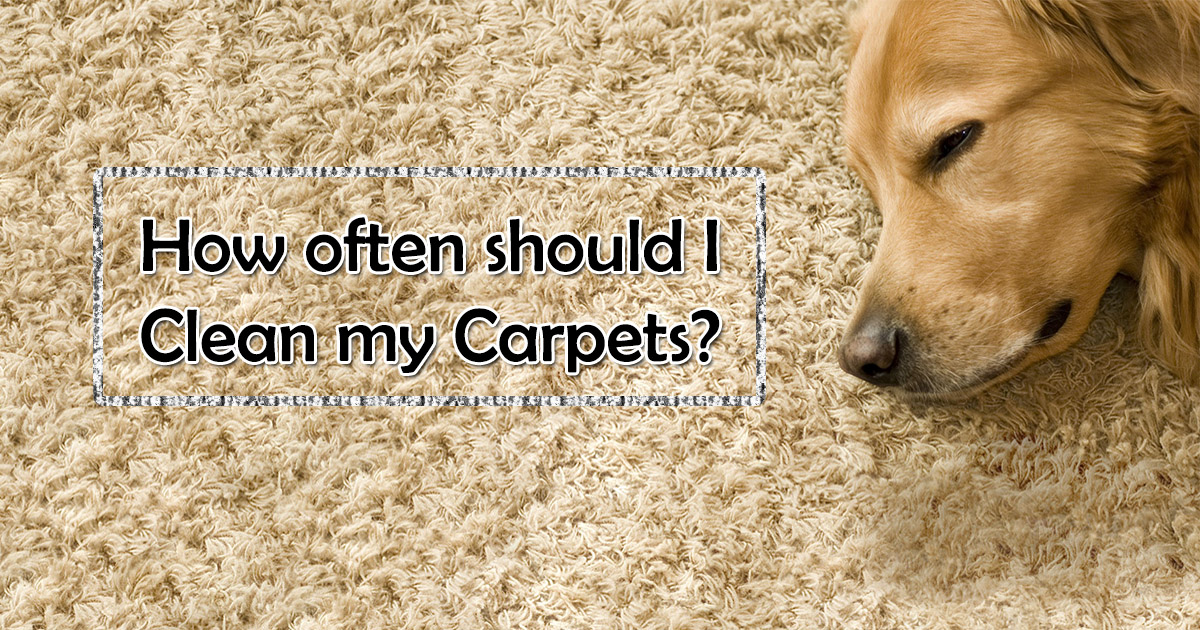 How often should I clean my Carpet image