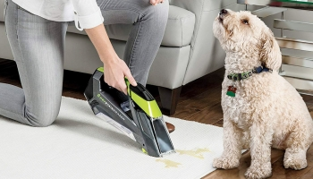 Shuck off your pet hair & stains with these Powerful Carpet Cleaners for Pets of 2020